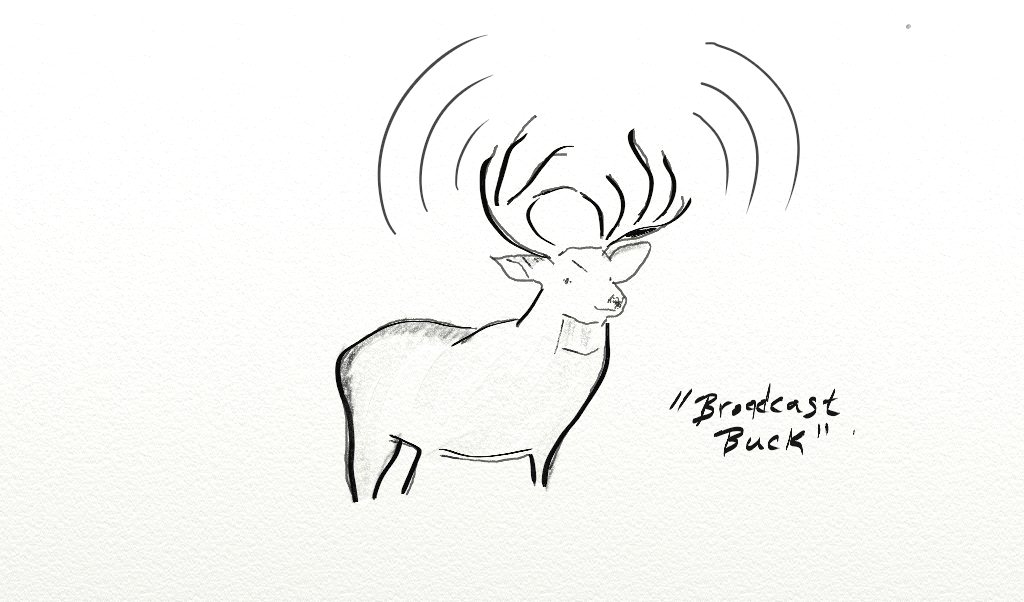 Broadcast Buck is Into It